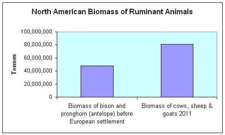 Chart-Ruminant-biomass