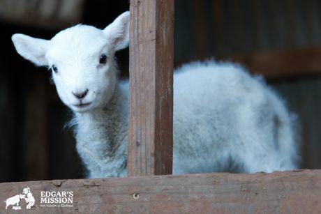 460-Around-the-Farm-October-2
