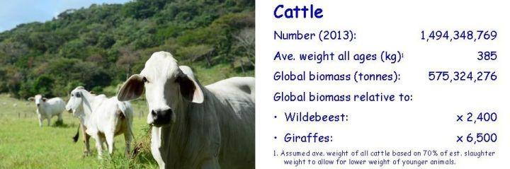 Biomass-comparison-cow-2-cropped