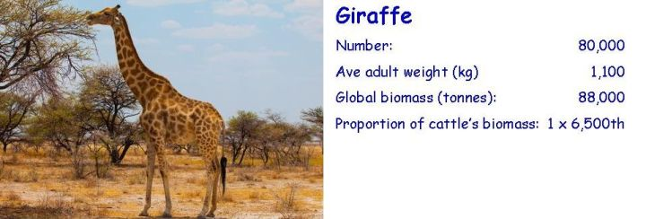 Biomass-comparison-giraffe-cropped