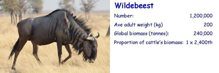 Biomass-comparison-wildebeest-cropped